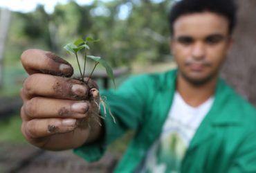 Instituto Fábrica de Florestas já plantou 34 mil árvores - Cetrel